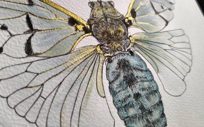 De invasie van de cicaden