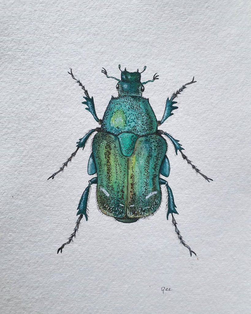 waterverf schilderij insect kever
