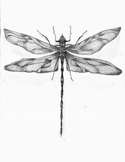Tekening van een grote libelle