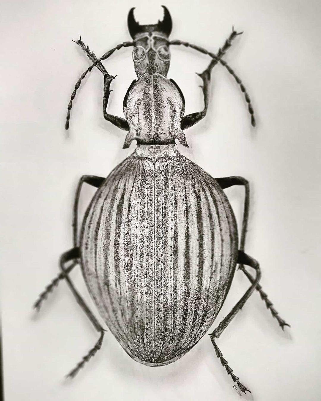 Tekening van de Brachygnathus angusticollis
