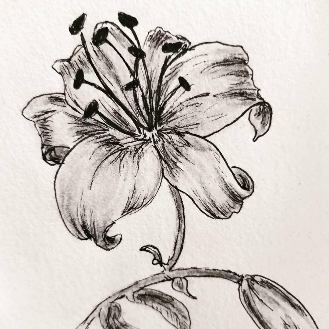 Tekening van een bloem