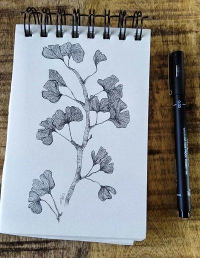 Tekening van de Salisburia adiantifolia