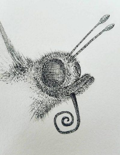 Vlindersnuit