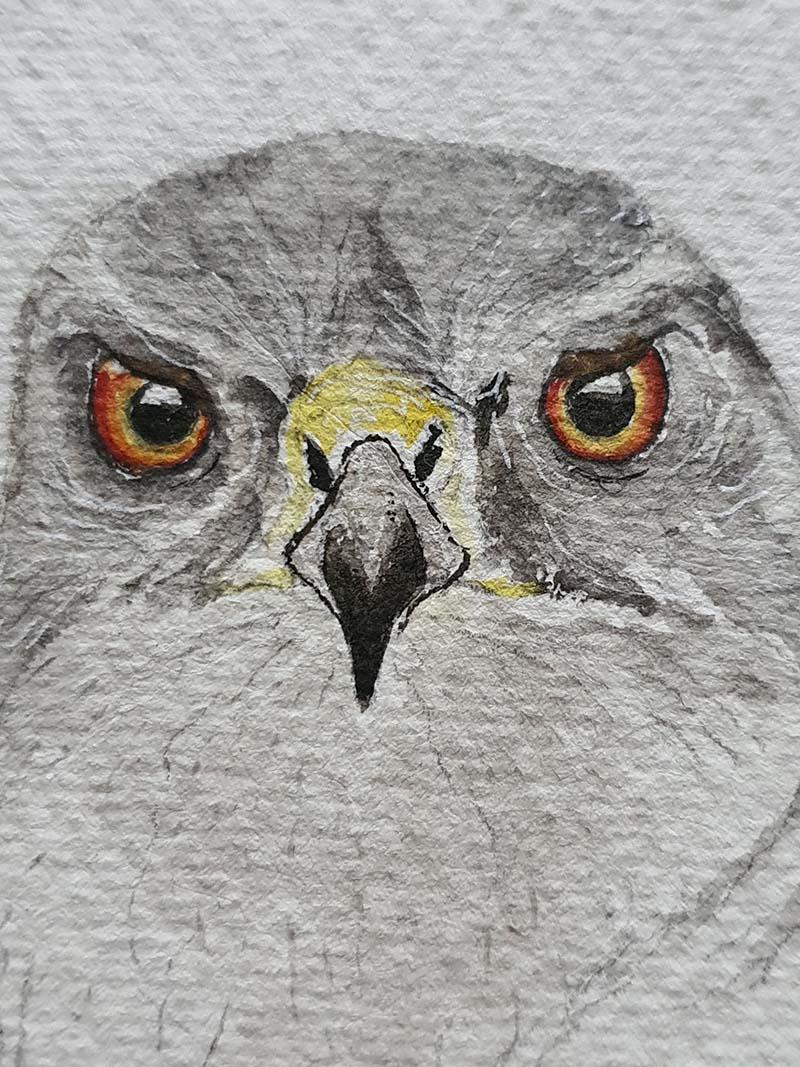 Waterverf schilderij kelten keltische maandvogel astrologie vogel havik