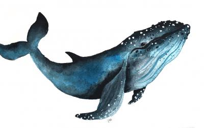 Waterverf walvis schilderen (timelapse)