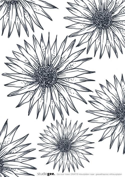 Kleurplaat Bloemen web 1