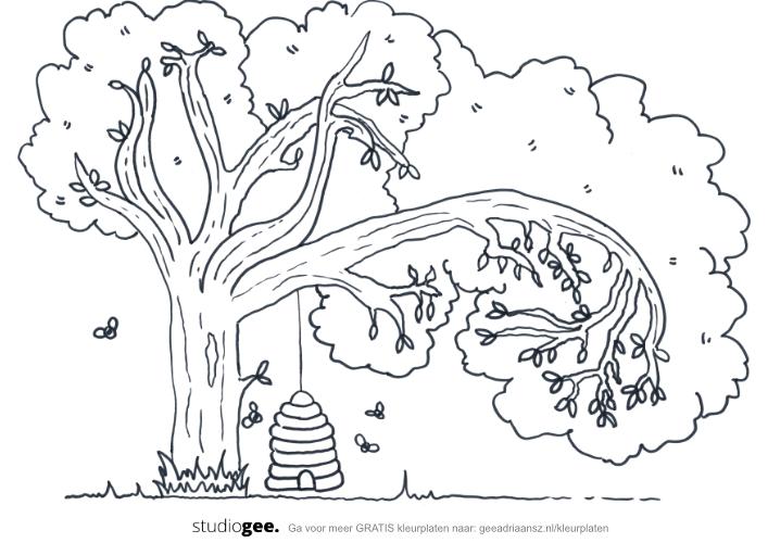 Kleurplaat Libelle Kleuren voor volwassenen