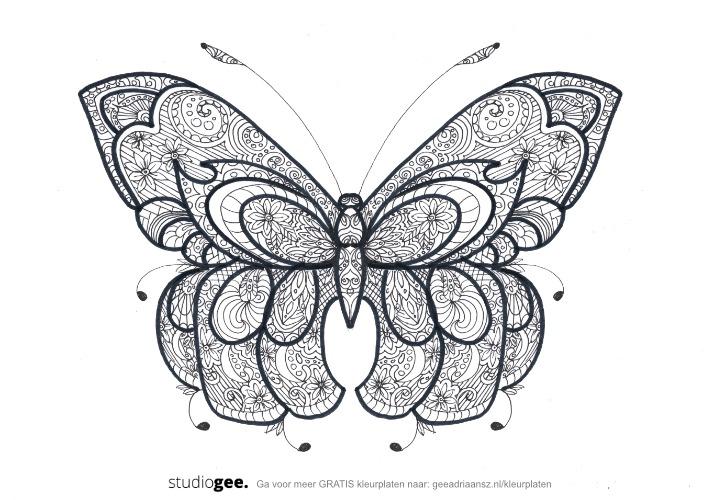 Kleurplaat Vlinder KVV