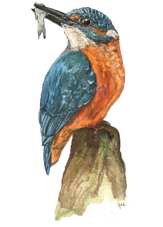 waterverf schilderij  ijsvogel vogel