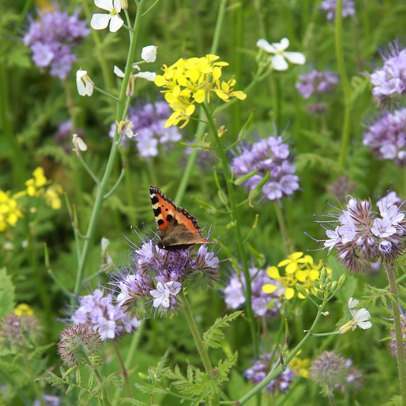 studio gee bloemenmix bijenpakket bijen vlinders bloemenzaden nationale zaaidag voor de bijen