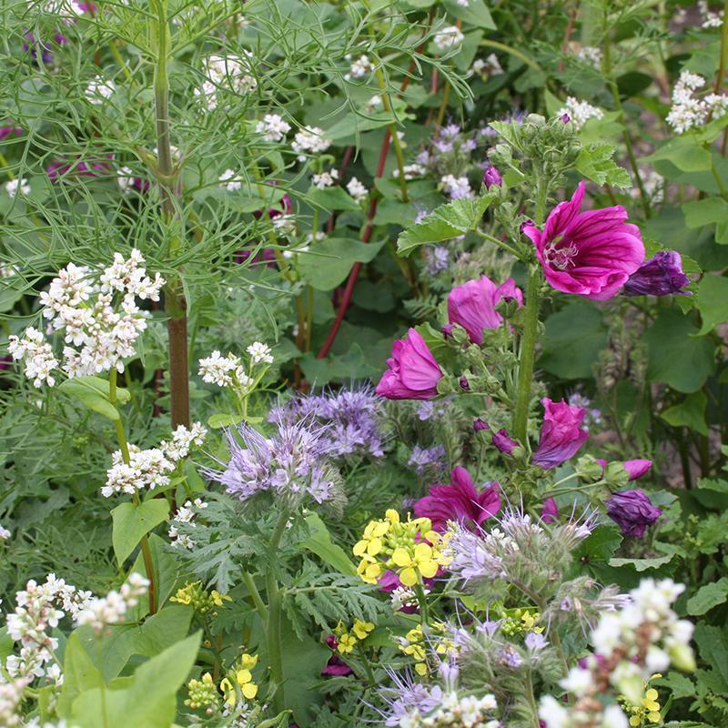 studio gee bloemenmix bijenpakket bijen vlinders bloemenzaden agenda