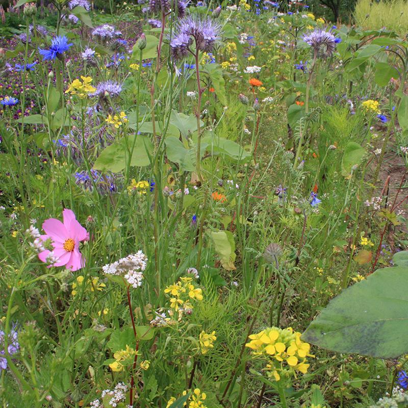 studio gee bloemenmix bijenpakket bijen vlinders bloemenzaden