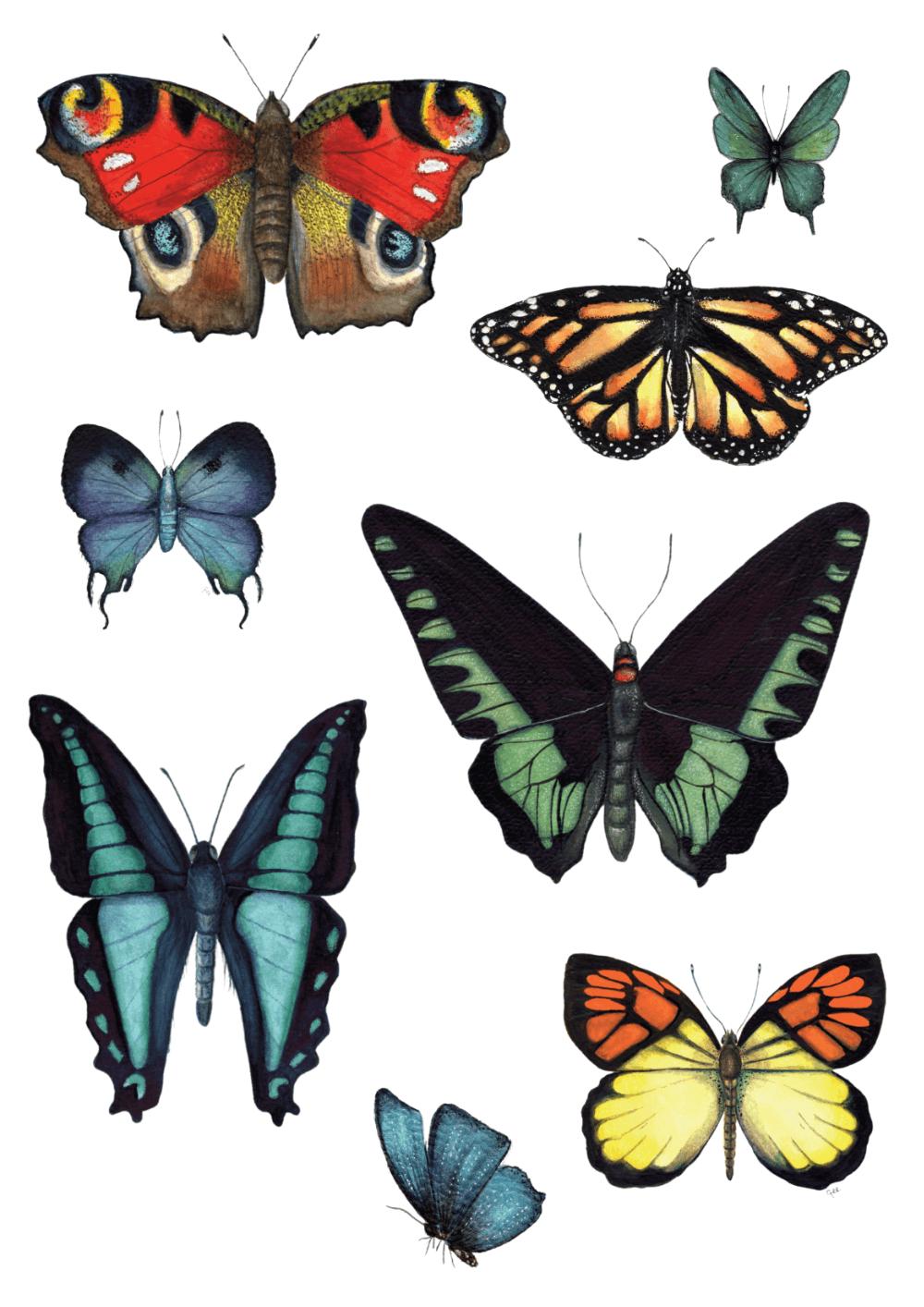 butterflies postcard small