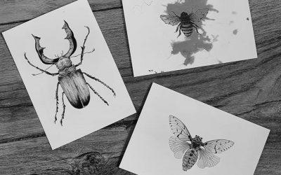 Insecten postkaarten