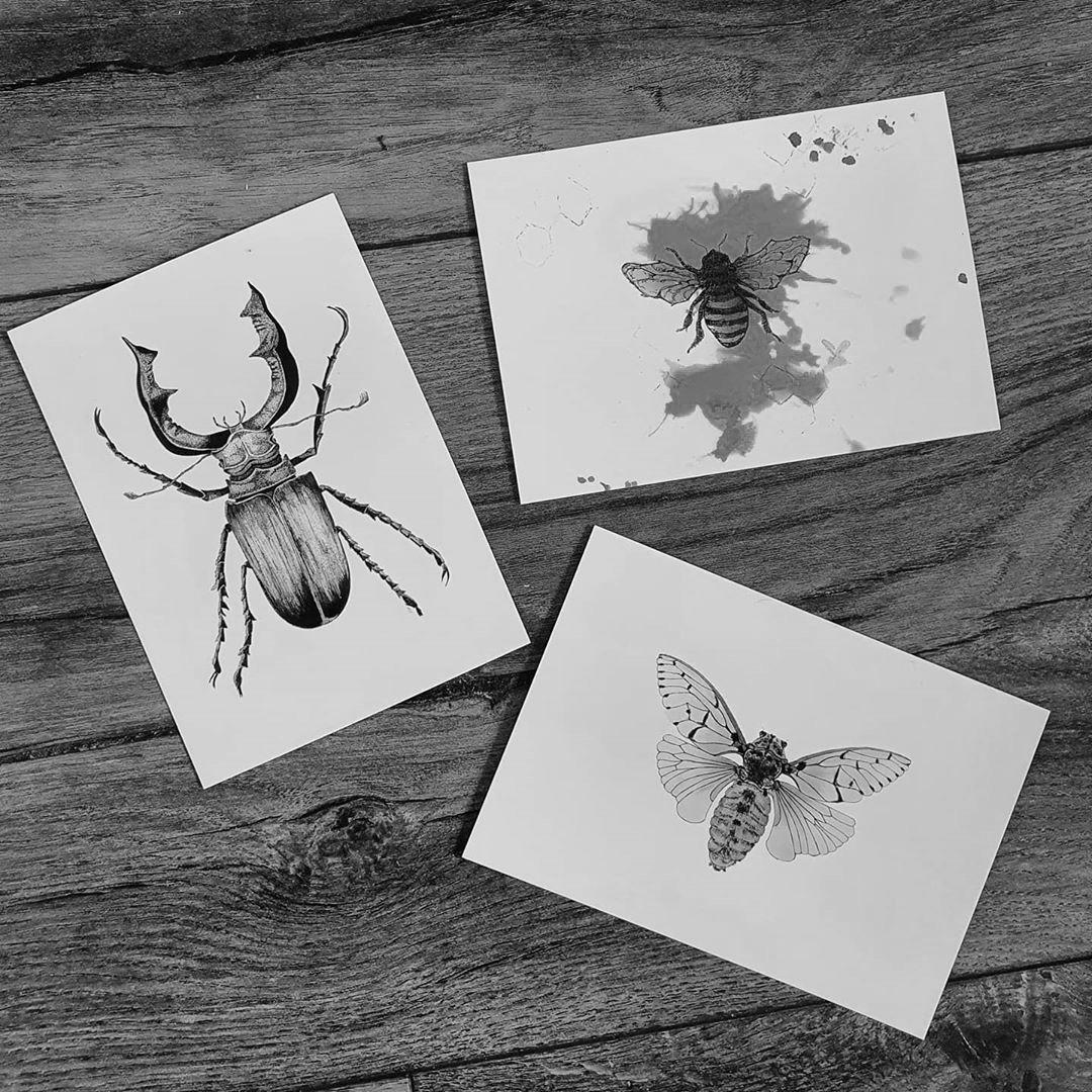 postkaart ansichtkaart cicade bij vliegend hert insecten kaarten